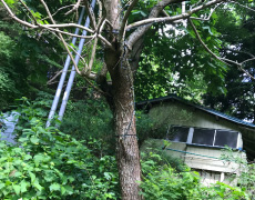 樹木伐採や庭石などの撤去